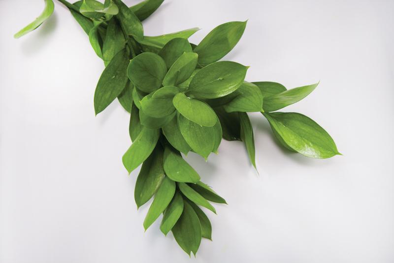 Israeli Ruscus California Cut Flower Commission